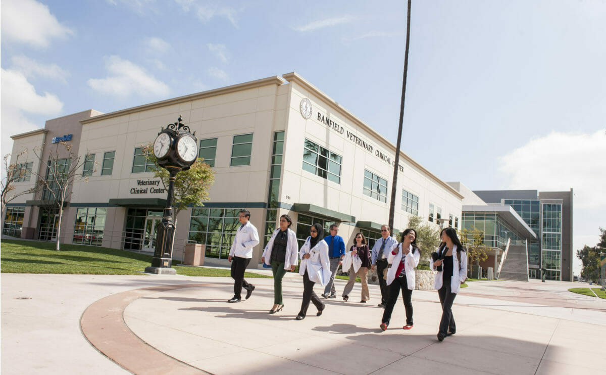 College of Optometry students and faculty walk the Esplanade at WesternU